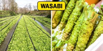Zöldség termések Thumbnail