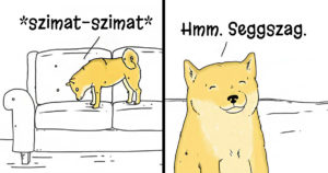Kutyák és macskák sajátosságai