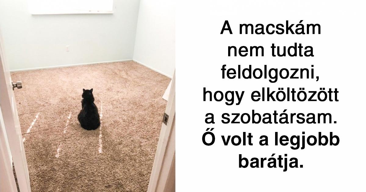 Állati szeretet Facebook