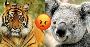 Milyen állat vagy mérgesen