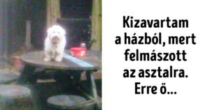 Házból kizavart kutya