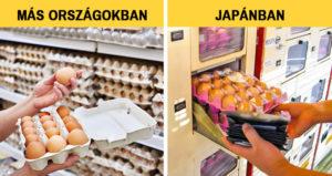 Japán élménybeszámoló
