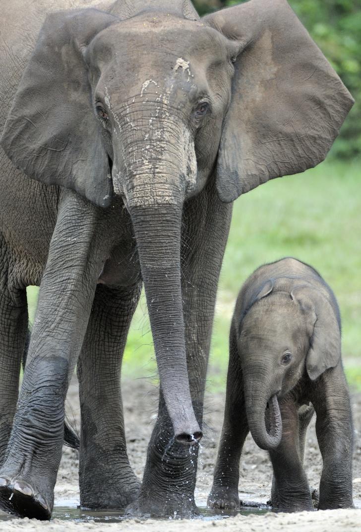 Elefánt fotó
