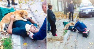 Kutyák törődése