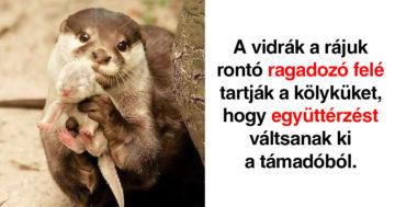 Aranyos állatos tények