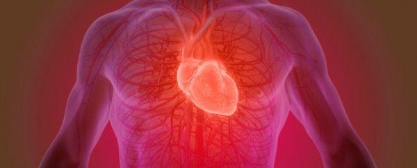 Emberi test szívverése