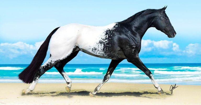 Hihetetlenül különleges állatok