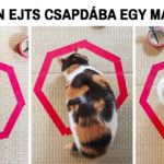 Megmagyarázhatatlan macskalogika