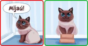 Rossz macska szokások
