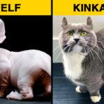 Különleges háziasított macskafajták