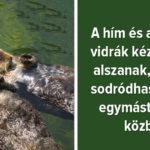 Állatvilág tények