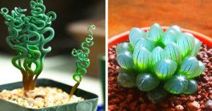 Csodálatos szobanövények