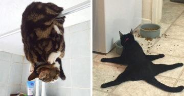 Furcsa macskák Facebook