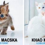 Legszebb macskák