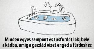 Macskaszabályok