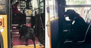 Önállóan buszozó kutya
