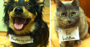 Szégyentáblás állatok