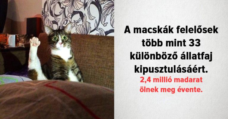 Tények a macskákról