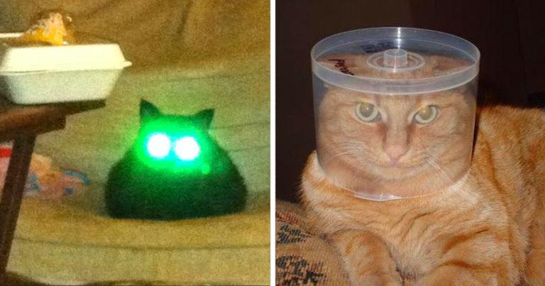 Űrlény macskák