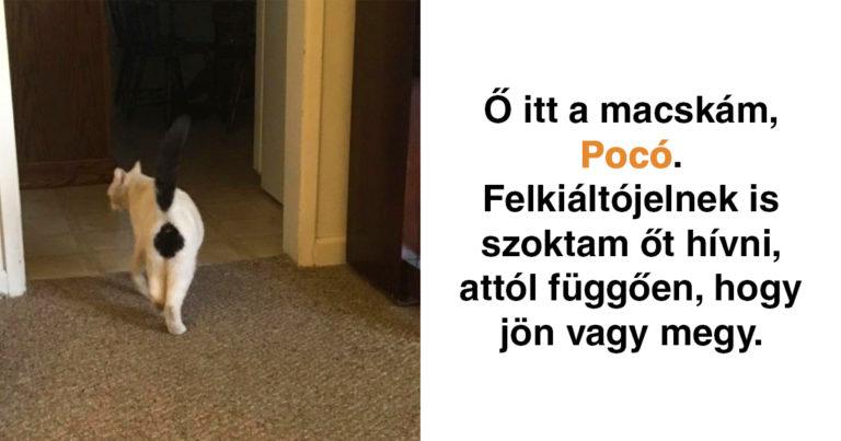 Vicces macskás Snapchat