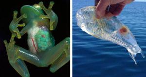 20 átlátszó állat, ami bármennyire is hihetetlen, de valóban létezik