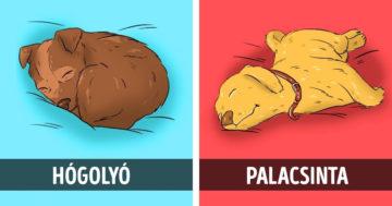 Kutyák alvópóza