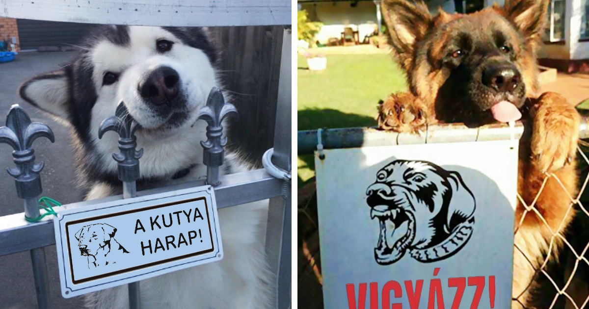 Veszélyes kutyák