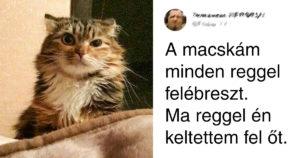 Dolgok, Amiket Csak A Macskatulajdonosok érthetnek