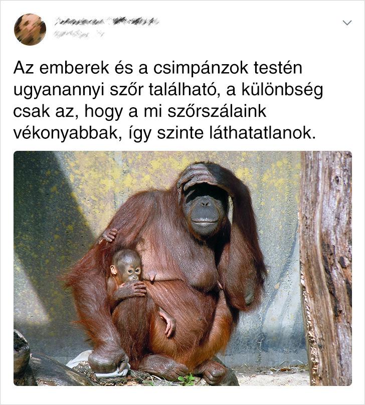 Ember és Csimpánz Szőre