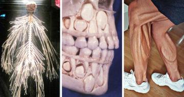 Érdekes képek és videók az emberi testről