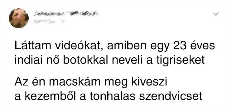 Tigris Vs Macska Fail