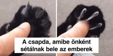 Különleges macskatulajdonságok