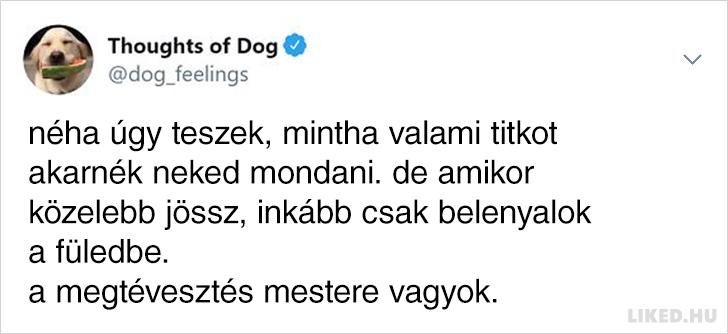 Kutya a megtevesztes mestere