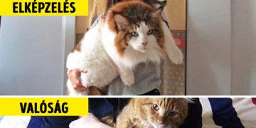 Main Coon macskák titkok és érdekességek