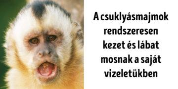 Meglepő tények az állatvilágról