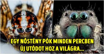 Pókok meg tudnának enni minket