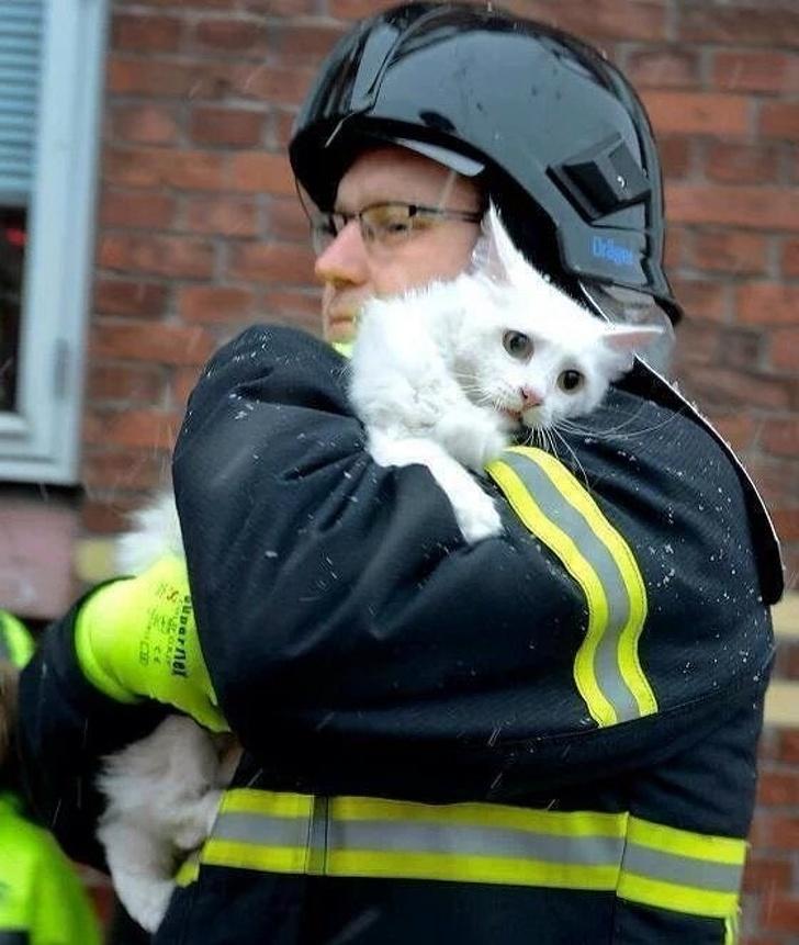 Tűzoltó macska mentés