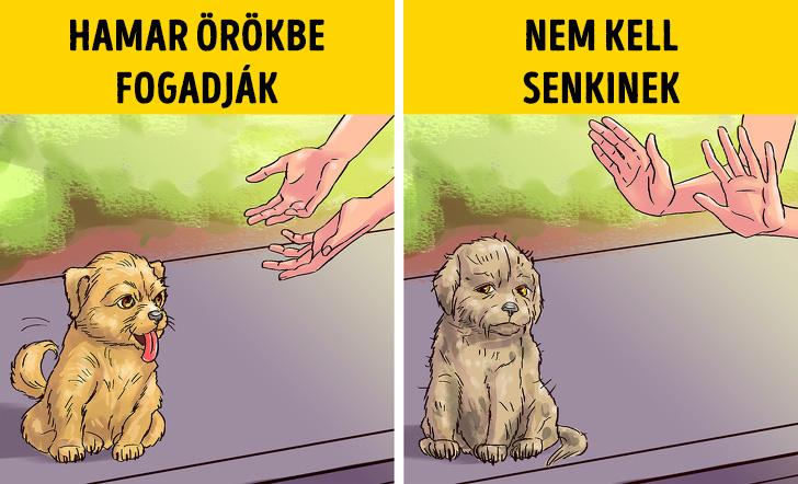 Kutyak es a szereto otthon