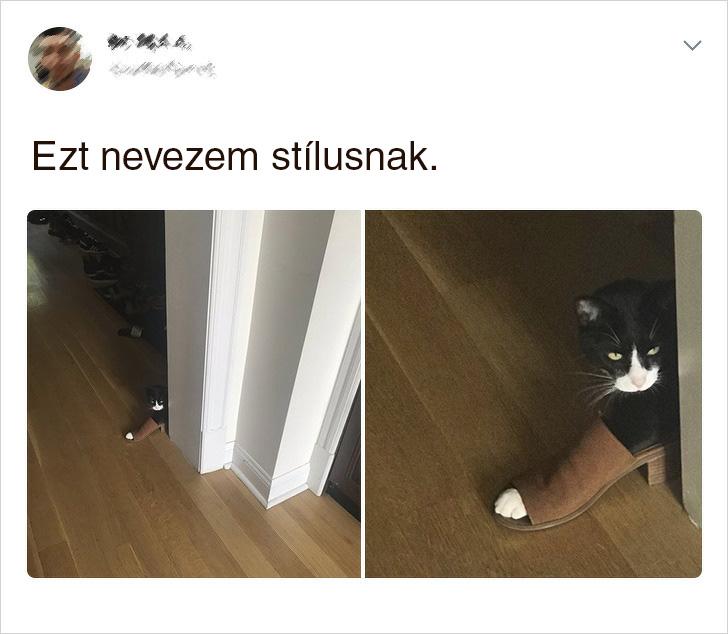 Stilusos cica