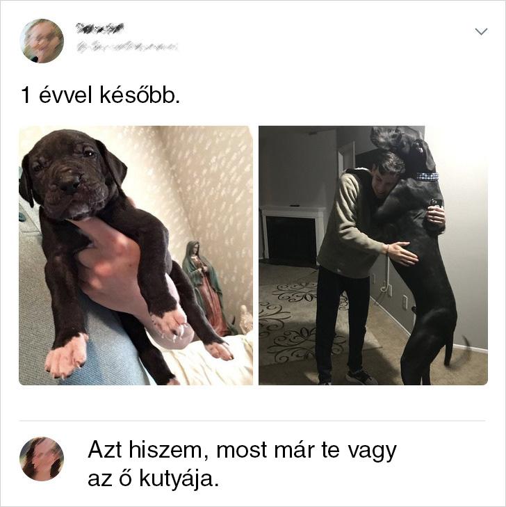 Te vagy az o kutyaja