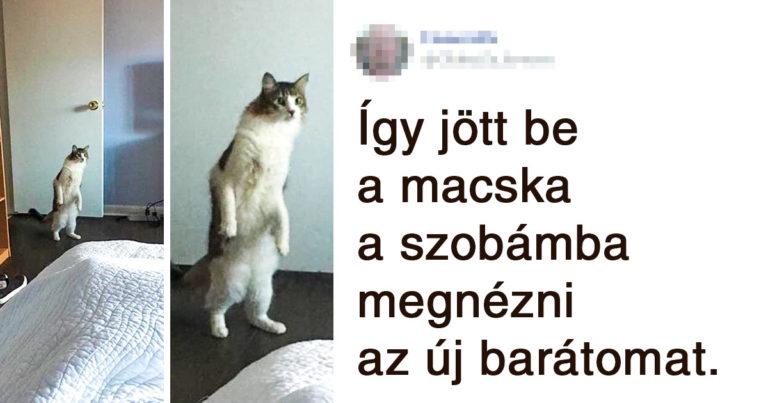 Vicces macskapillanatok