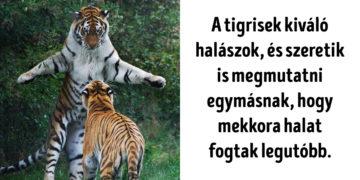Vicces tények az állatokról
