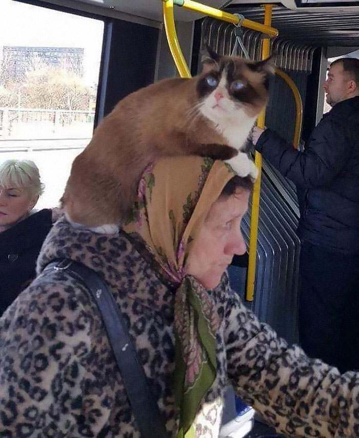 humans of trolleybuses 324 5dc28873d20c8 700