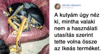 Állatok érthetetlen viselkedése