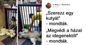 Kutyák, akik nem mindig voltak jó kutyák