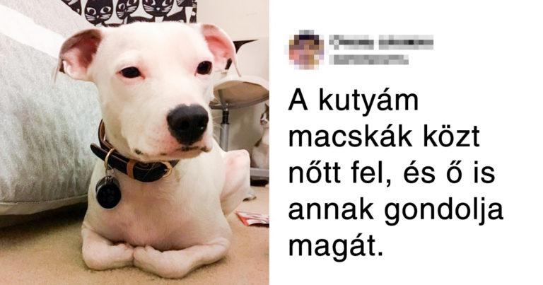 Szívet elrabló háziállatok