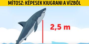 Cápás mítoszok