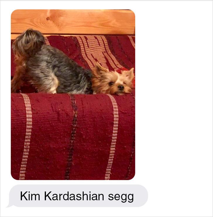 Kim Kardashian kutyasegg