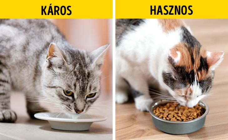 Macskák és a tej