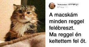 Macskás dolgok